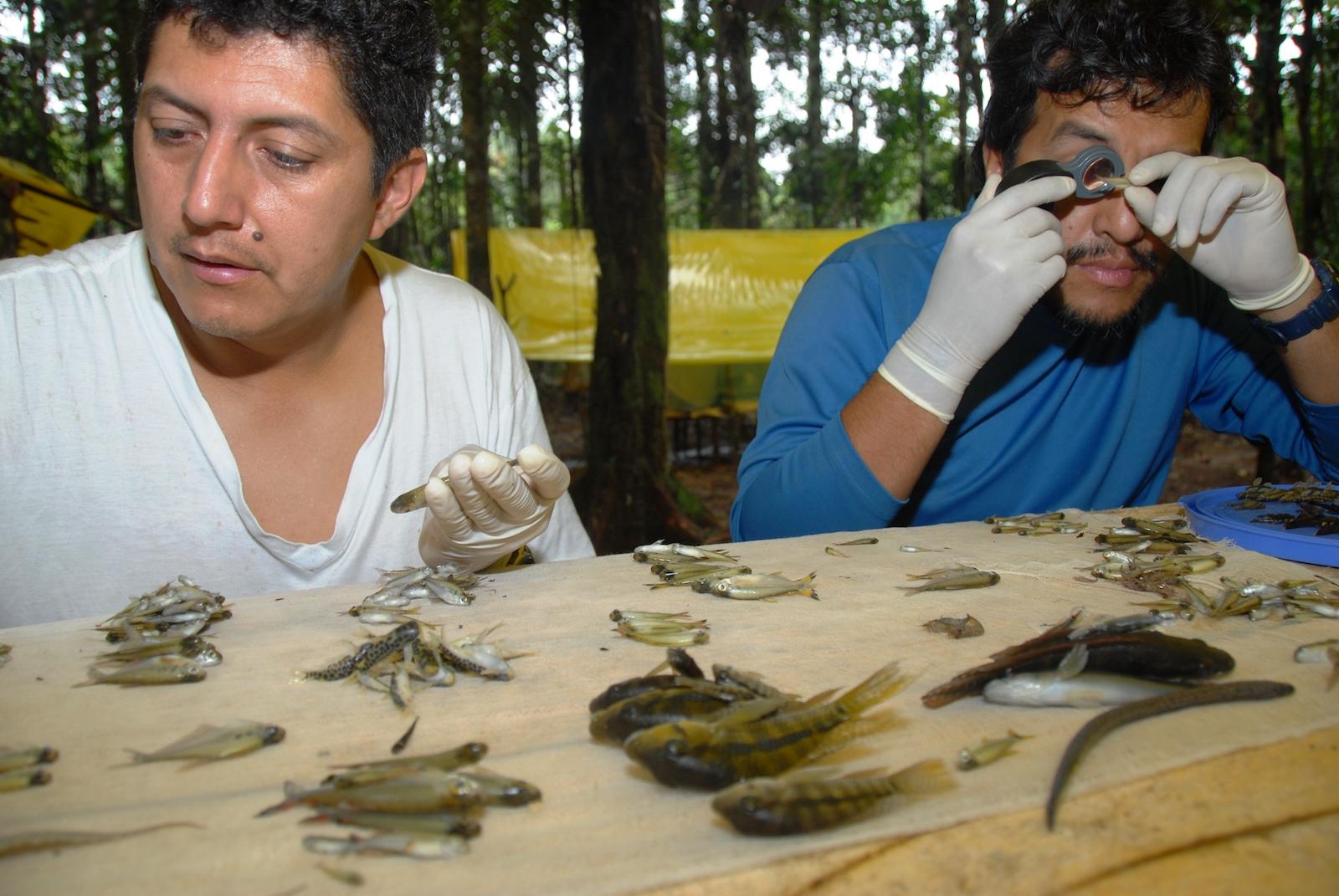 En el 2010 expertos del Field Museum de Chicago realizaron un inventario biológico y social de Yaguas. Foto: Álvaro del Campo.
